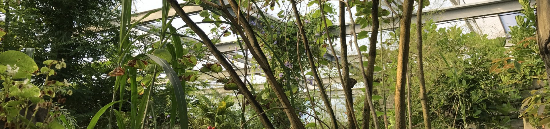 Botanical garden design - Green Conceptors